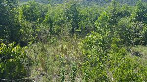 Shamba Linauzwa Kiwangwa Bago | Land & Plots For Sale for sale in Pwani Region, Bagamoyo