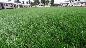 Artificial Grass / Turf   Garden for sale in Dar es Salaam, Ilala