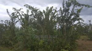 Shamba Linauzwa | Land & Plots for Rent for sale in Pwani Region, Bagamoyo