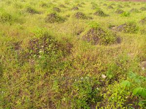 Eneo Linauzwa Heka 7.5 Lipo Kibaha Madafu | Land & Plots For Sale for sale in Pwani Region, Kibaha