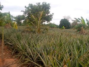 Shamba Linauzwa | Land & Plots For Sale for sale in Bagamoyo, Kiwangwa