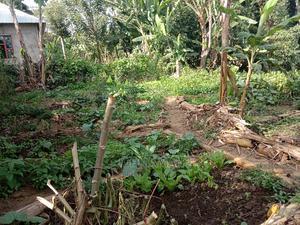 Kiwanja Kinauzwa Arusha Visiwani | Land & Plots For Sale for sale in Arusha Region, Arusha