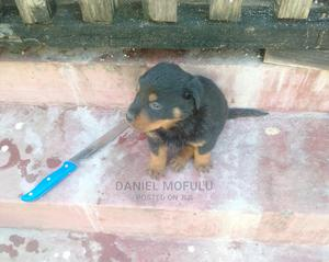 1-3 Month Female Purebred Rottweiler | Dogs & Puppies for sale in Dar es Salaam, Kinondoni