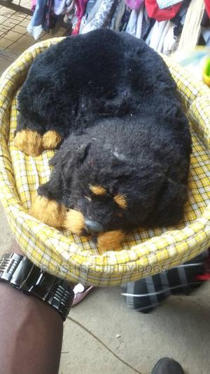 3-6 Month Female Purebred Rottweiler | Dogs & Puppies for sale in Dar es Salaam, Kinondoni