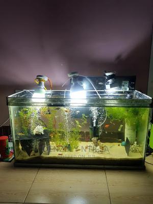 Aquarium 3 Na Vifaa Vyake Vyote Laki 5 Used   Fish for sale in Dar es Salaam, Kinondoni