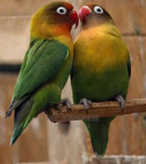 PARROTS (Kasuku) | Birds for sale in Dar es Salaam, Ilala