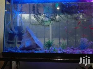 Aquariums And Pet Fish   Pet's Accessories for sale in Arusha Region, Arusha