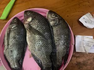 SATO Fresh Kabisa | Meals & Drinks for sale in Dar es Salaam, Kinondoni