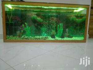 Aquariums And Pet Fish Available   Fish for sale in Arusha Region, Arusha