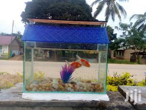 Aquariums And Pet Fish   Fish for sale in Dar es Salaam, Kinondoni