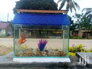Pet Fish And Aquariums   Fish for sale in Dar es Salaam, Kinondoni